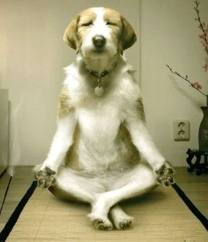 image meditating dog