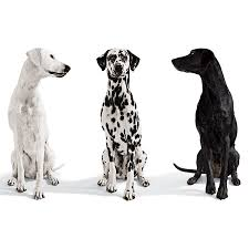 images three dogs