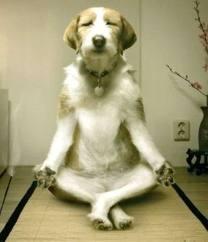 image meditating dog