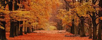 autumn 4