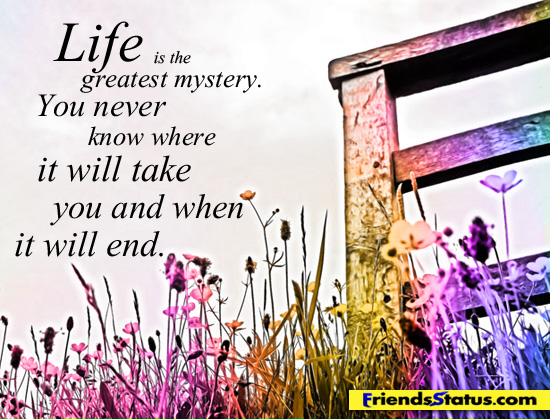 mystery life 1