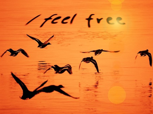 feel-free 1