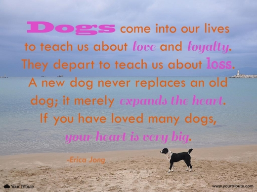 Quotes About Death Of A Pet Death Of A Pet Quote Dog Death Quotes | Funny Cat Dog Pictures